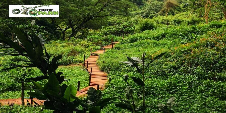 Cầu gỗ Công Viên Ozo