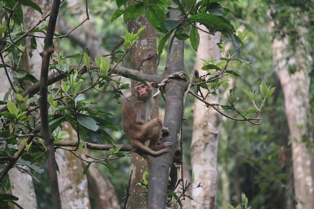 Khỉ trong Vườn Thực Vật